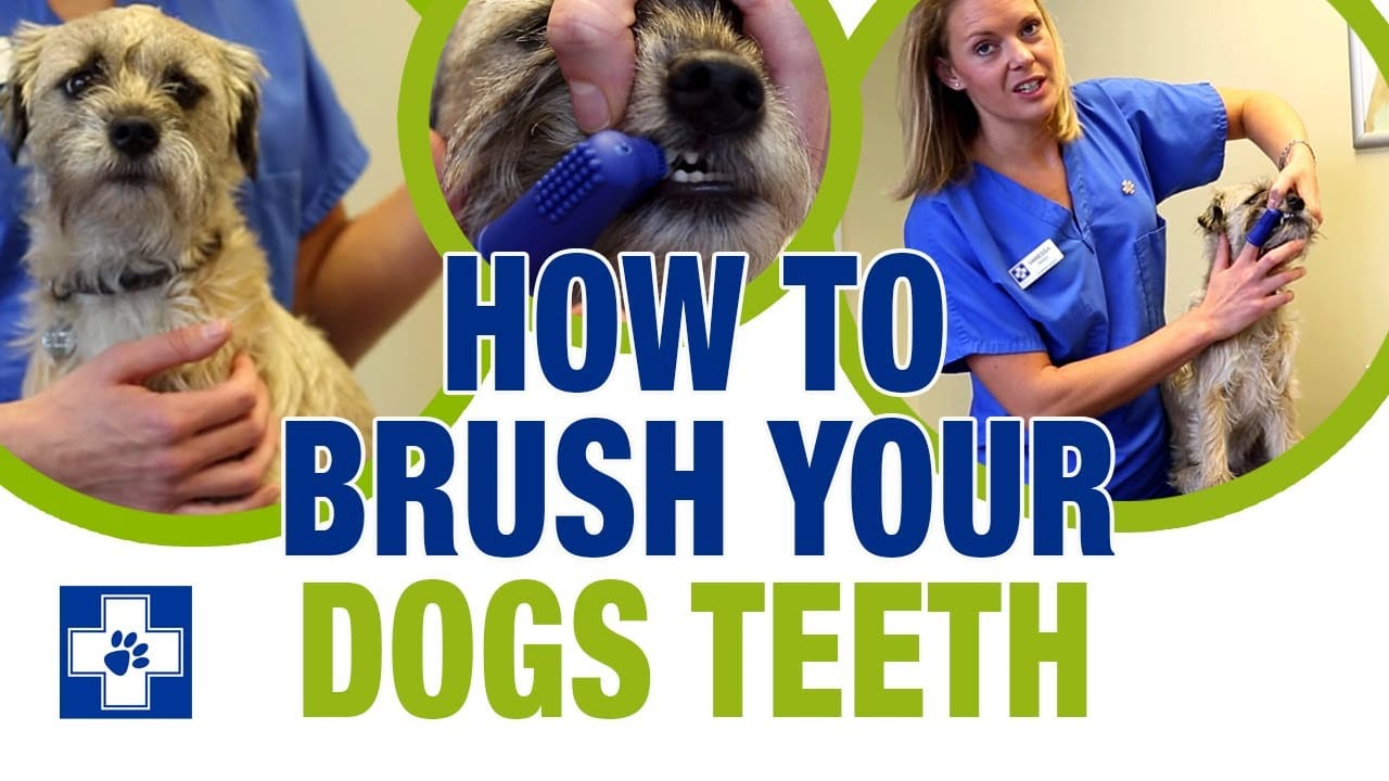 How to Brush Your Dog's Teeth